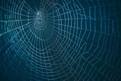 私達生きとし生けるものは皆、蜘蛛の巣のように互いに繋がり、影響し合って生きている
